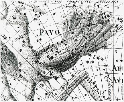 Astronomy: The Peacock: Pavo; constellation (drawing)